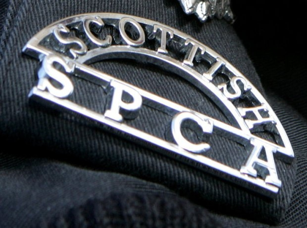 SSPCA: Dead dog may have been 'purposefully targeted'